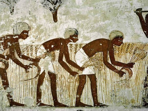agriculture in ancient Egypt5