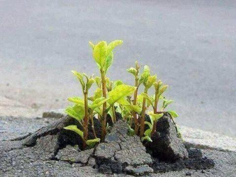 اعلموا أن الله يحيى الأرض بعد موتها - حياة القلب - الإيمان - العبودية - اللجوء إلى الله - - الجبهة السلفية - د محمد علي المصري