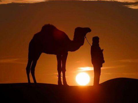 اختيار العرب لحمل رسالة الإسلام - رسالة الإسلام - العرب - نزول القرآن بلسان العرب - الجبهة السلفية - محمد علي المصري
